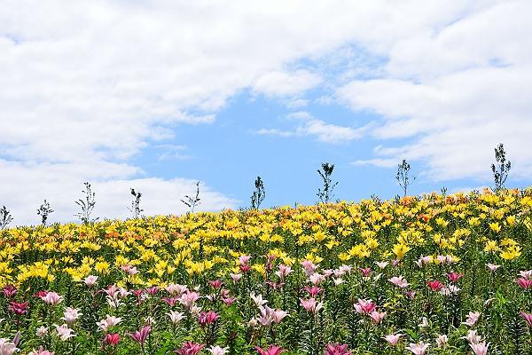 大阪ゆり園