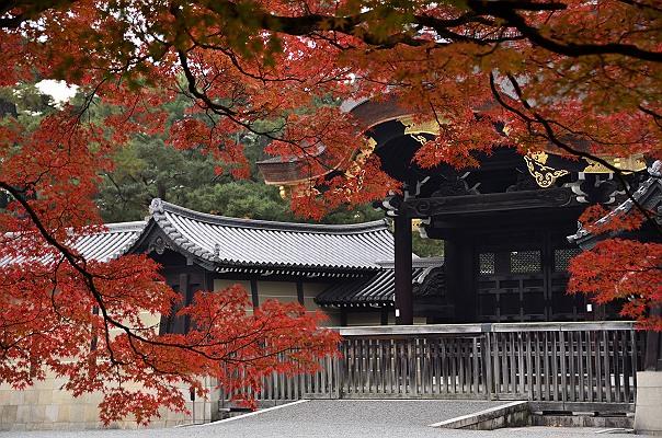 京都御苑2.JPG
