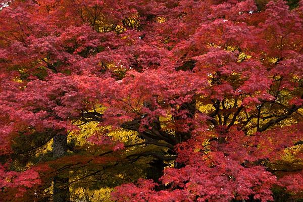 京都御苑4.jpg