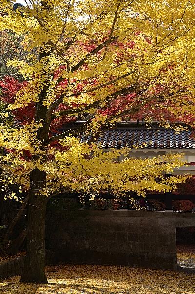 京都紅葉10.jpg