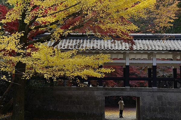 京都紅葉13.jpg
