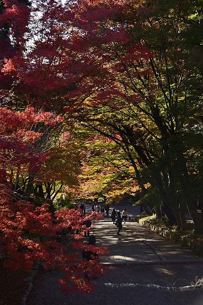 京都紅葉2.jpg