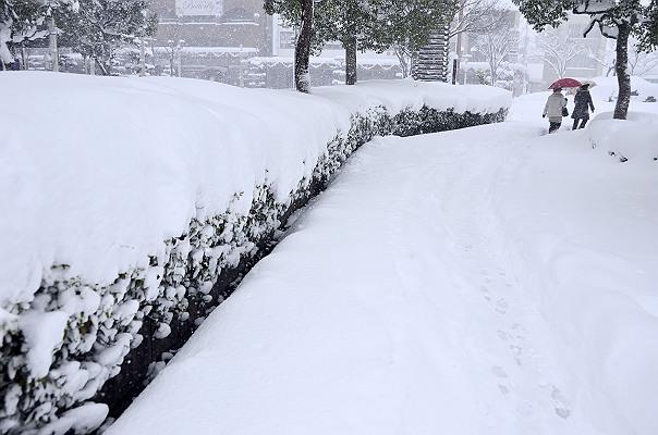彦根駅前.jpg