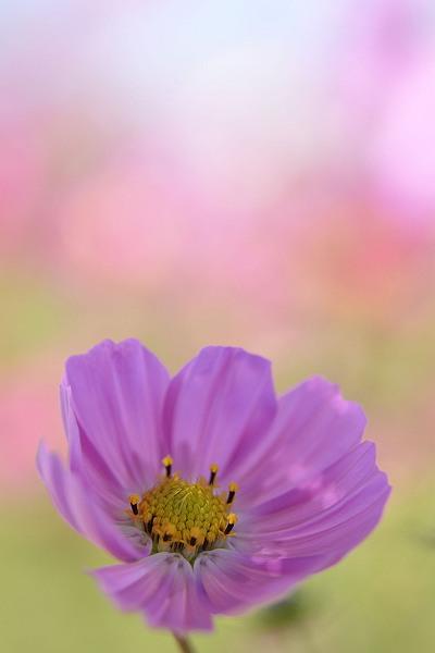 花桟敷3.jpg