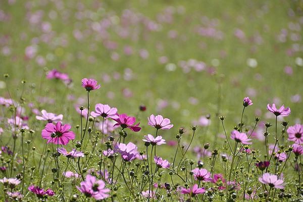 花桟敷1.jpg