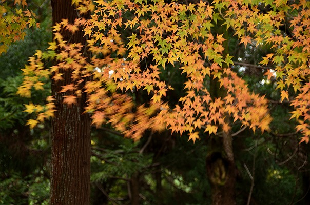 長野公園1.JPG