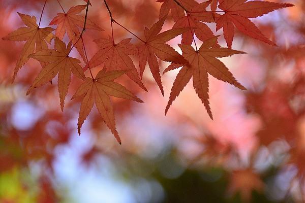 長野公園3.jpg